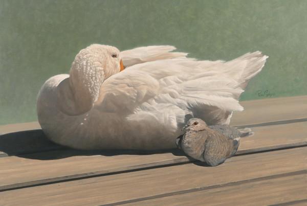 Goose-&-Dove