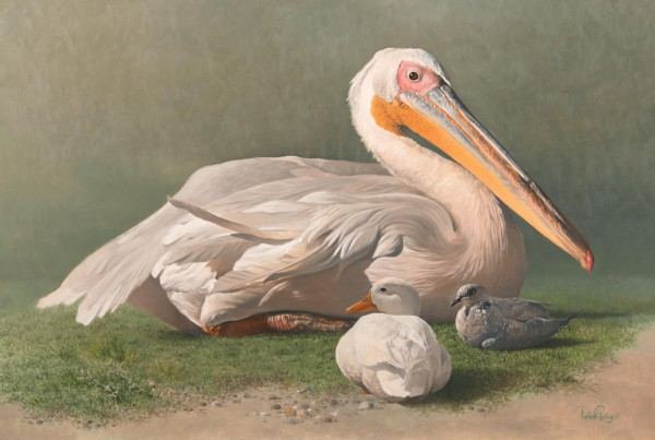 Pelican-&-Dove
