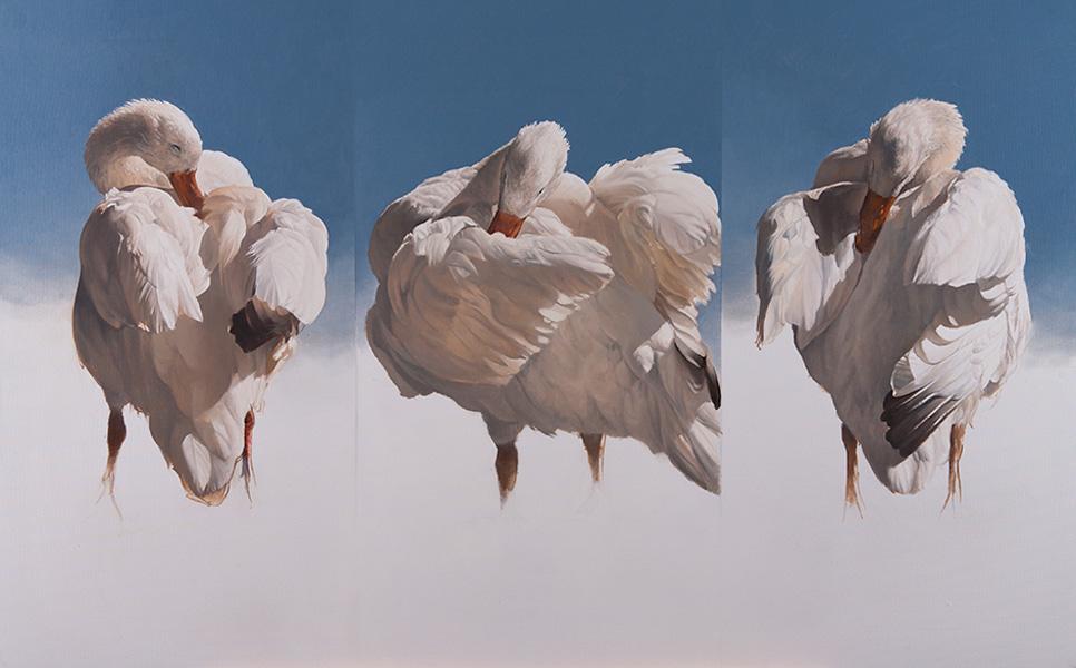 Peter-Gray_Avian-Ballet