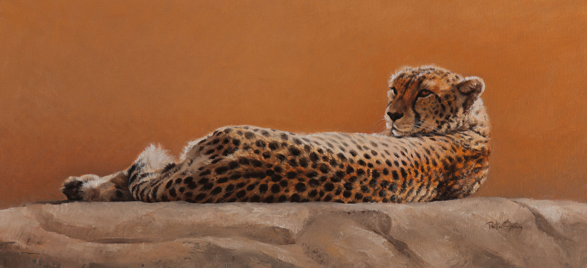 Basking-Cheetah