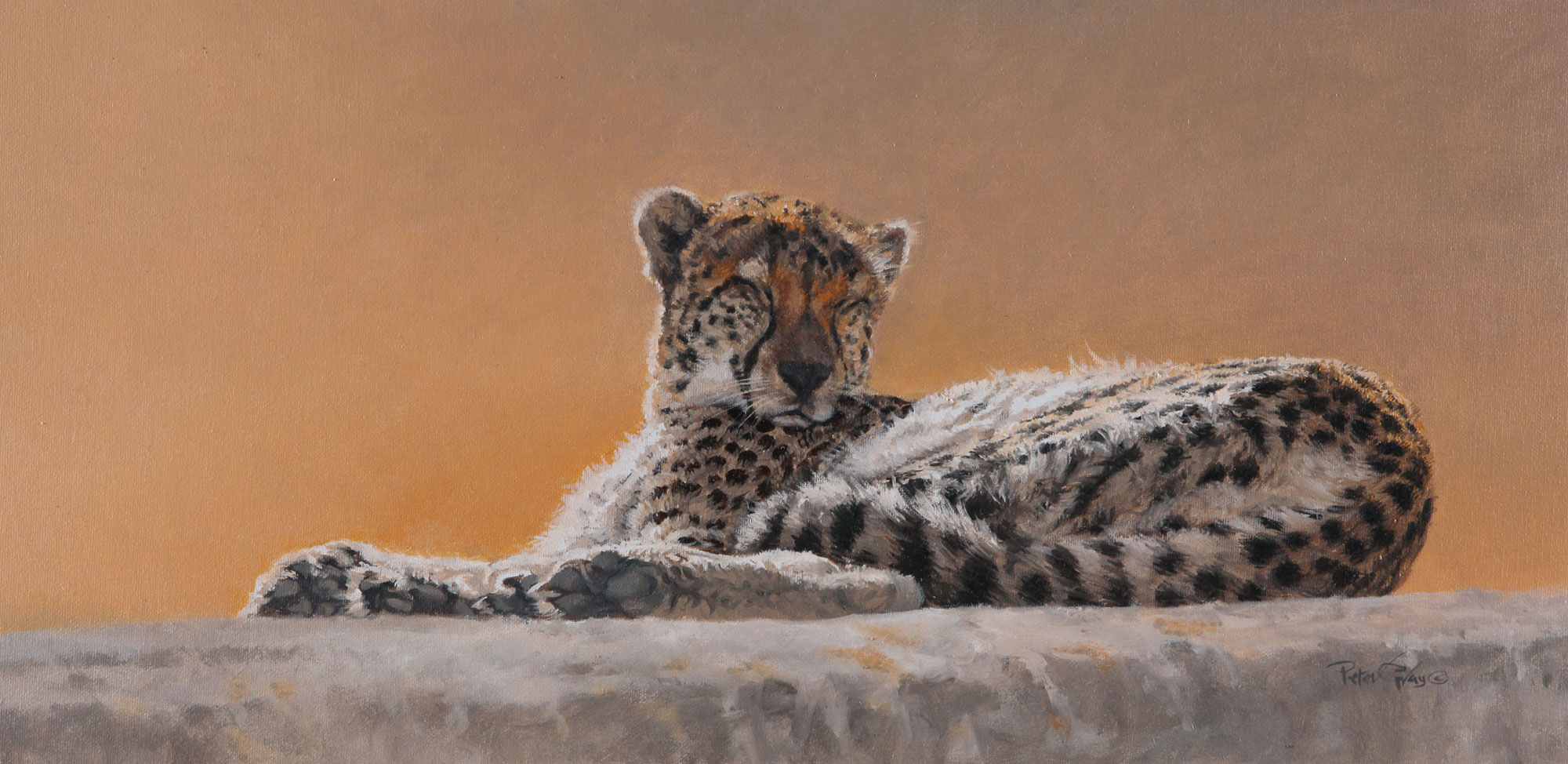 Basking-Cheetah_02