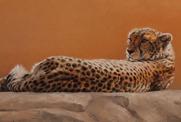 Basking Cheetah