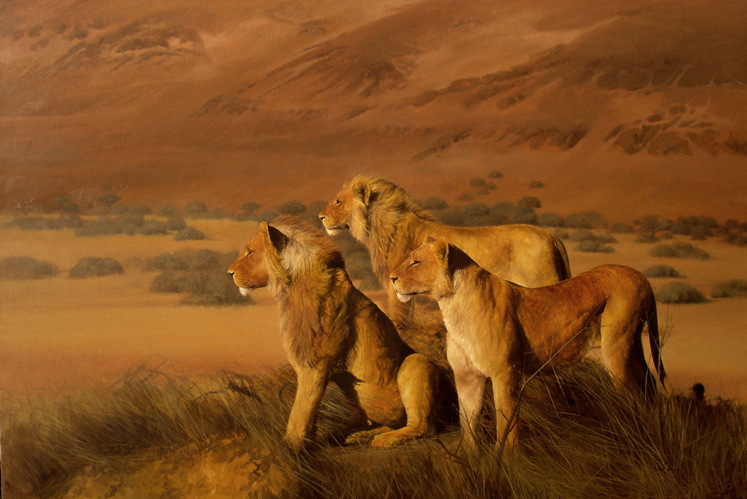 Namibian-Lions